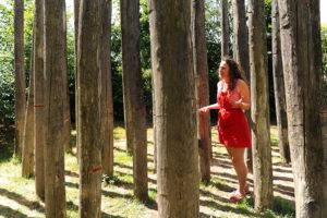 Ombilicologue dans la Forêt sans tête