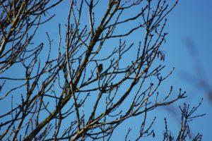 Si vous aimez les oiseaux, le jardin se prête a de belles observations.