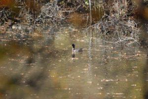 A 200m de la maison, un étang nous réserve de belle rencontres toute l\'année.