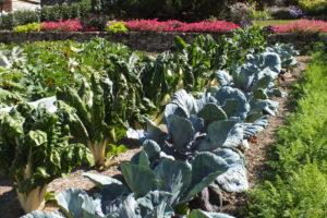 En fonction de la saison, vous pouvez venir vous approvisionner en légumes du moment.