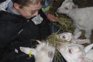 Notre élevage de chèvre