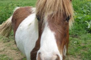 Notre petit poney emmènera vos enfants pour une petite promenade dans la campagne environnante.