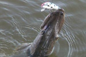 La pêche est bonne