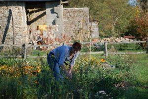 Notre jardin communique avec celui du gîte pour profiter des produits de saison.